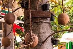 Etiqueta colgante del árbol para la entrada de texto fotos de archivo libres de regalías