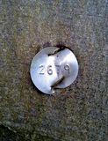 Etiqueta de identificação na árvore de faia Imagens de Stock