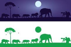 Etiqueta de la pared de los animales salvajes ilustración del vector