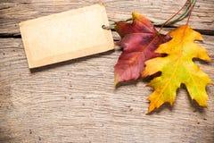 Etiqueta de la venta con las hojas de arce Fotos de archivo