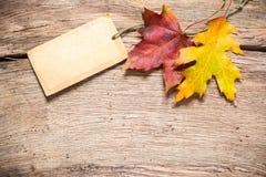 Etiqueta de la venta con las hojas de arce Foto de archivo libre de regalías