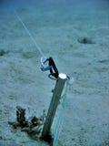 Etiqueta de plástico subacuática Foto de archivo