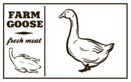 Etiqueta de produtos de carne Ganso Carne de aves domésticas Foto de Stock Royalty Free