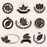 Etiqueta e iconos de la hoja del tabaco fijados Vector Imagen de archivo
