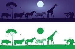 Etiqueta hermosa de la pared de los animales salvajes ilustración del vector