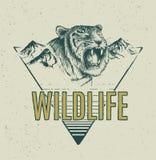 Etiqueta retra principal enojada del tigre Fotografía de archivo libre de regalías