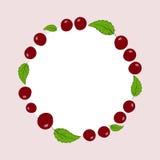 Etiqueta tirada mão das cerejas do vetor Fotografia de Stock
