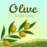 Etiqueta verde-oliva, projeto do logotipo Olive Branch ilustração stock