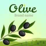 Etiqueta verde-oliva, projeto do logotipo Olive Branch ilustração do vetor