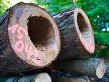 Etiquetado abatendo os mortos que estão o furo da praga do parasita das árvores Imagem de Stock Royalty Free