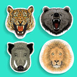 Etiquetas ajustadas do tigre do varrão do urso do leão fotografia de stock royalty free
