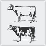 Etiquetas da carne do vetor e ilustração das vacas Moldes para logotipos da carne do projeto Imagens de Stock Royalty Free