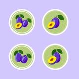 Etiquetas do projeto com a ameixa saboroso madura Fotografia de Stock