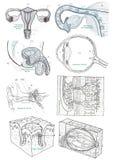 Etiquetas teste padrão da anatomia do corpo humano, parte mim ilustração royalty free