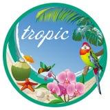 Etiquete el trópico con el coco, orquídeas y un pequeño loro Fotos de archivo libres de regalías