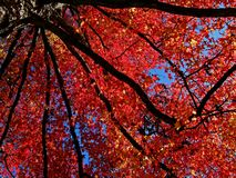etiudy błękitny czerwień Fotografia Royalty Free