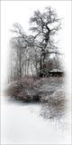 etiudy zima Zdjęcia Stock