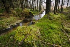 etive森林幽谷 库存图片