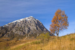 Etive tree. Autumnal tree in front of a Scottish mountain peak royalty free stock images