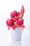 Etlingera elatior, gingers flower or Torch Ginger Bud Stock Images