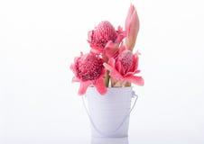 Etlingera elatior, gingers flower or Torch Ginger Bud Stock Photo