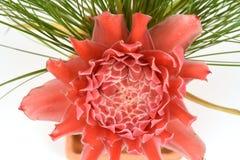 Etlingera elatior (Jack) RM Smith, flowers. Stock Image