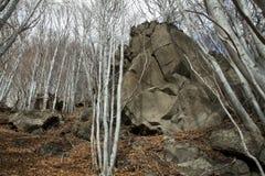 Etna, Betulle Fotografia Stock Libera da Diritti