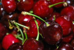 Etna cherries Stock Photography