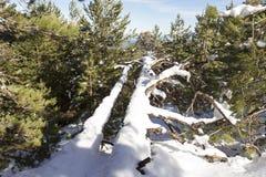 Etna - inverno della montagna Fotografie Stock