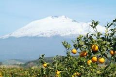 Etna oranges. Orange with Mount Etna background Royalty Free Stock Photo