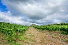 etna regionu Sicily winnicy wino Zdjęcie Stock