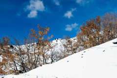 Etna snow covered in Sicily Royalty Free Stock Photo