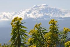 Etna volcano (Sicily) Royalty Free Stock Photography