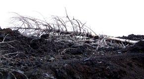 Etna-Volcano-Sicily - Creative Commons by gnuckx Royalty Free Stock Photos