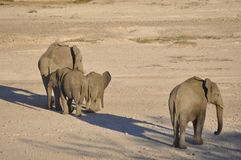 In Africas oldest wildlife national park there are lots of elephants. Etoscha Salt pans: In Africas oldest wildlife national park there are lots of girafs and stock photos