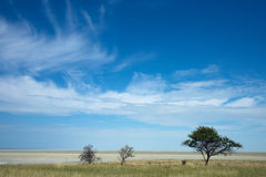 Etosha Stock Photos