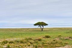 Etosha, Namíbia, África foto de stock