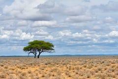 Etosha, Namíbia, África fotografia de stock