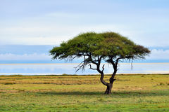 Etosha, Namibia, Afryka Fotografia Stock