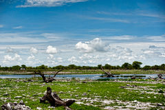 Etosha Nationaal Park, Namibië, Afrika Royalty-vrije Stock Afbeeldingen