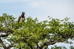 Etosha Nationaal Park, Namibië, Afrika Stock Foto's