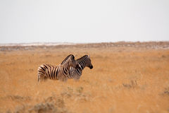 Etosha National Park, Namibia Stock Photo
