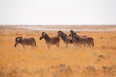 Etosha National Park, Namibia Stock Photography