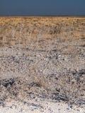 Etosha. National Park, Namibia, Africa Stock Photos