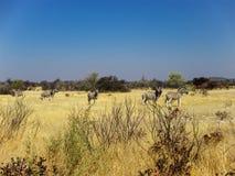 Etosha National Park in Namibia Stock Photos