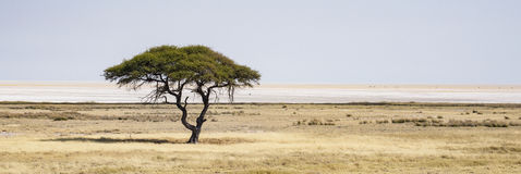 Etosha National Park. A picture of the Etosha National Park in Namibia Stock Image