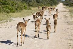 Etosha Nationalpark Royalty Free Stock Photos