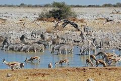 Etosha Nationalparklandschaft mit Teichwasser Stockbilder