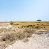Etosha niecka i otwarte sawannowe równiny Etosha park narodowy obraz royalty free