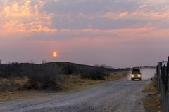 ETOSHA niecka NAMIBIA, SIERPIEŃ, - 29, 2018: Pustynny safari w samochodzie przy zmierzchem dzień fotografia stock